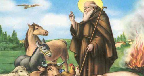 Papa Francesco, le parole, i fatti
