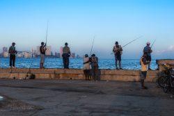 Cuba, gattopardi all'opera