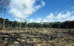 Quanto costa difendere la terra e l'ambiente